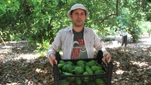 Avokadoda hedef 50 milyon adet
