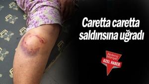 Caretta caretta saldırısına uğradı