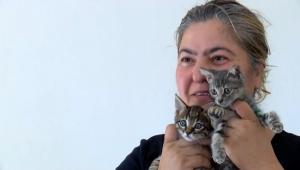 Engelli yavru kedilerle otobüs şoförlüğü yapıyor