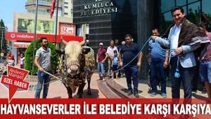 Hayvanseverler ile belediye karşı karşıya