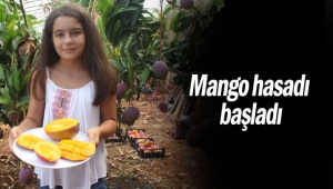 Mango hasadı başladı