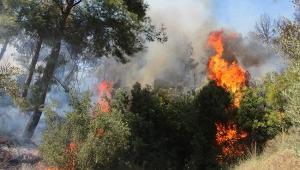 Perge yakınında yangın korkuttu