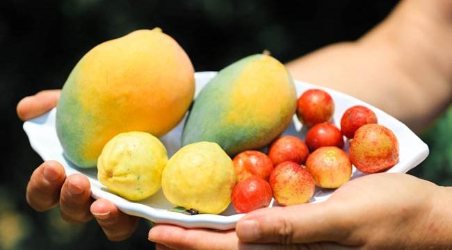 Tropikal meyvecilerin Avrupa hayali