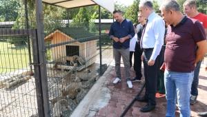 Başkan Esen, hayvan barınağını inceledi
