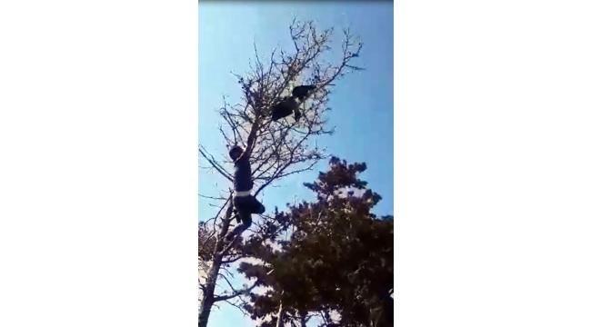 Kanadında poşetle ağaca takılı kaldı