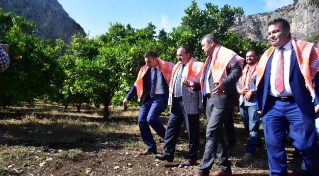 Kimyasalsız 120 ton portakal üretildi