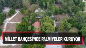 Millet Bahçesi'nde Palmiyeler kuruyor