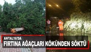 Antalya'da fırtına ağaçları kökünden söktü