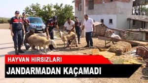 Hayvan hırsızları jandarmadan kaçamadı