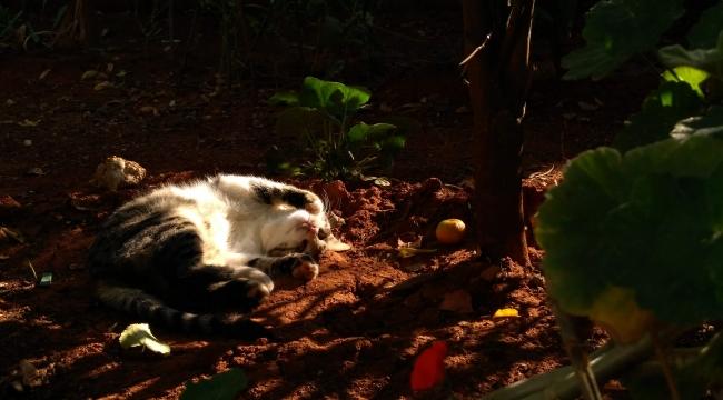 Ağaç altında keyif uykusu