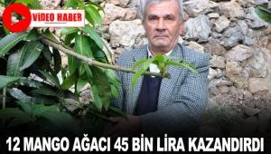12 mango ağacı 45 bin lira kazandırdı