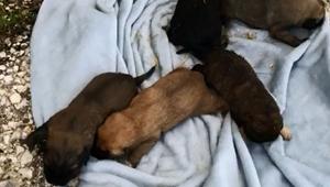 Anneleri ölen 5 yavru köpek, emin ellerde