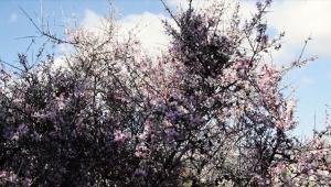 Demre'de kış ortasında bahar havası