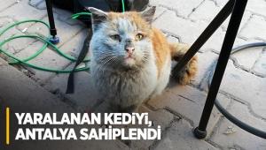 Yaralanan kediyi, Antalya sahiplendi
