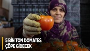 5 bin ton domates çöpe gidecek
