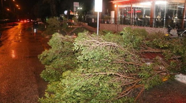 Antalya'da fırtına ağaç devirdi!