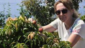 Litchi, longan ve mango 'yerli' oluyor