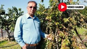 Türkiye'nin ilk 'ketembilla' meyvesini yetiştirdiler