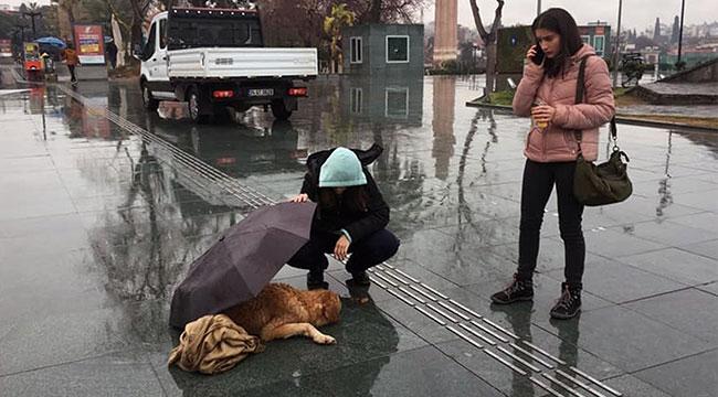 Yağmurda ıslanan köpeğe, şemsiyeli koruma