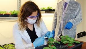 Akdeniz Üniversitesi'nde tütün bitkisinden koronavirüs aşı çalışması