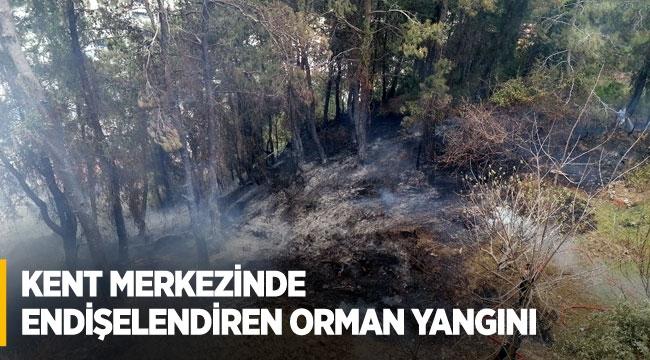 Kent merkezinde endişelendiren orman yangını
