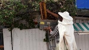 Oğul veren arılar marketin çatısında toplandı