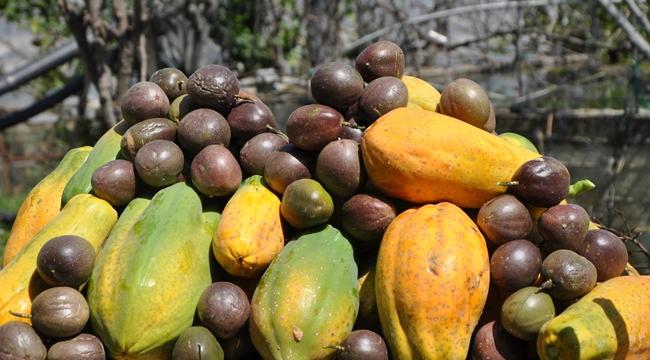 Bağışıklık sistemini güçlendiren tropikal meyveler
