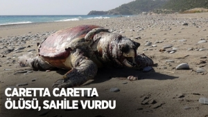 Caretta caretta ölüsü, sahile vurdu