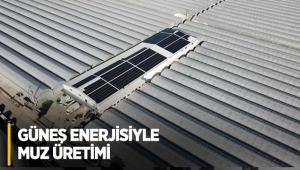 Güneş enerjisiyle muz üretimi