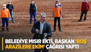 Koronavirüse karşı belediye mısır ekti, başkan 'boş arazilere ekim' çağrısı yaptı