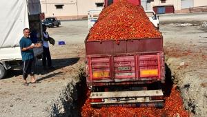 Fiyatı düşen domates salçalık oldu