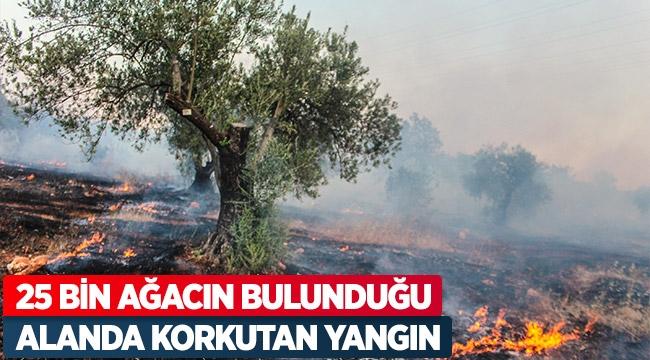 25 bin ağacın bulunduğu alanda korkutan yangın