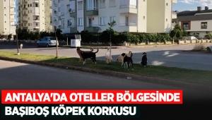 Antalya'da oteller bölgesinde başıboş köpek korkusu