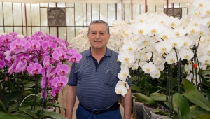 Koronavirüs orkideyi de vurdu