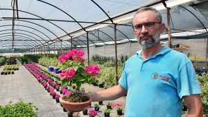 5 yıldır süs bitkisi üretiyor