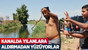 Kanalda yılanlara aldırmadan yüzüyorlar