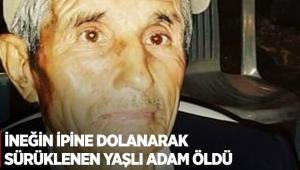 İneğin ipine dolanarak sürüklenen yaşlı adam öldü