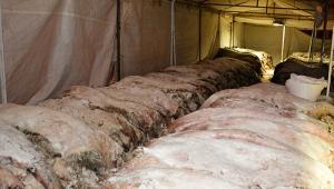 THK Korkuteli'de 7 bin 166 deri topladı