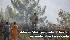 60 hektar ormanlık alan küle döndü
