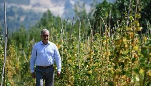 Çandır fasulyesinde üretim 3 yılda 15 kat arttı