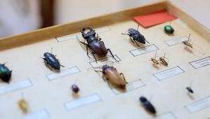 Çizgi filmlerin canavarı geyik böceği, koleksiyonda sergileniyor