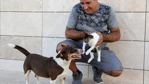 Köpek 'Max', üç yavru kediye annelik yapıyor
