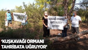 'Kuşkavağı Ormanı tahribata uğruyor'