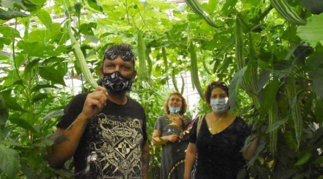 Serada Tayland kabağı üretti