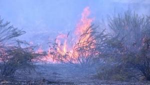Antalya'da çalılık yangınını, itfaiyecilerle beraber söndürdüler