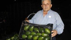 Antalya'dan Rusya'ya 35 bin avokado