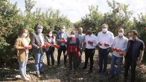 CHP'den nar hasadına destek