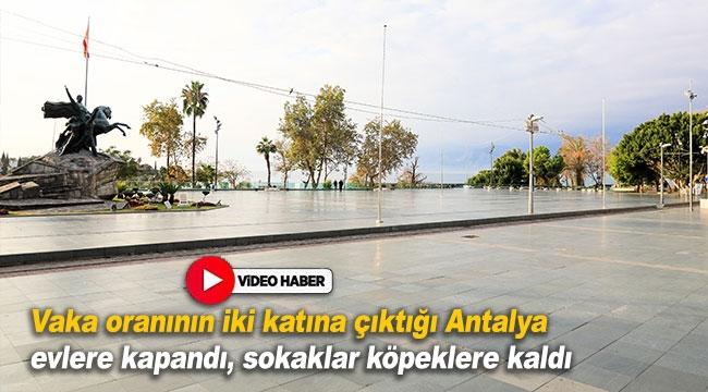 Antalya evlere kapandı, sokaklar köpeklere kaldı