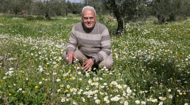 Zeytinpark'ta baharın müjdecisi papatyalar açtı