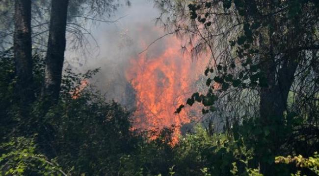 3 ayrı noktada orman yangını